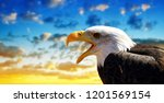 portrait of a bald eagle ... | Shutterstock . vector #1201569154