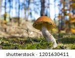 big mushroom grow in moss.... | Shutterstock . vector #1201630411