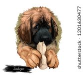 leonberger puppy dog breed...   Shutterstock . vector #1201630477