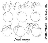 vector set with hand drawn... | Shutterstock .eps vector #1201689487