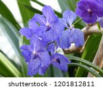 collection of orchid isolated... | Shutterstock . vector #1201812811