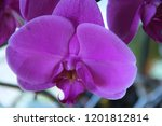 collection of orchid isolated... | Shutterstock . vector #1201812814