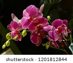 collection of orchid isolated... | Shutterstock . vector #1201812844