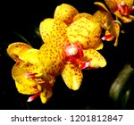 collection of orchid isolated... | Shutterstock . vector #1201812847