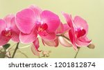 collection of orchid isolated... | Shutterstock . vector #1201812874