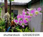beautiful purple orchid in the... | Shutterstock . vector #1201823104