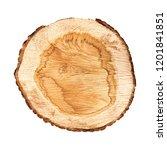 cross section of tree trunk... | Shutterstock . vector #1201841851