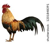 low polygon male rooster with...   Shutterstock .eps vector #1201848391