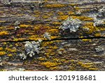 backgrounds and textures  old... | Shutterstock . vector #1201918681