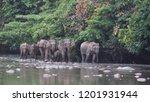 borneo pygmy elephant an...   Shutterstock . vector #1201931944