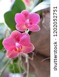 beautiful orchid bloom | Shutterstock . vector #1202052751