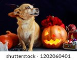 charming little dog with a... | Shutterstock . vector #1202060401