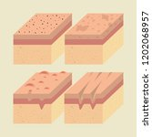 layers of skin types | Shutterstock .eps vector #1202068957
