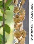 seashells hanging on a string... | Shutterstock . vector #1202073007