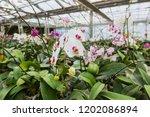 orchid growing in the garden in ... | Shutterstock . vector #1202086894