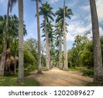 avenue of royal palm trees at... | Shutterstock . vector #1202089627