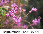 the rain forest pink orchid in... | Shutterstock . vector #1202107771
