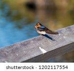 a dainty delightful  little... | Shutterstock . vector #1202117554