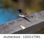a dainty delightful  little... | Shutterstock . vector #1202117581