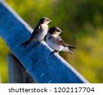 two dainty delightful  little... | Shutterstock . vector #1202117704