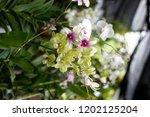 the purple orchids garden | Shutterstock . vector #1202125204