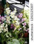 the purple and green orchids... | Shutterstock . vector #1202125207