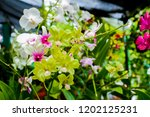 the purple and green orchids... | Shutterstock . vector #1202125231