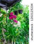 the purple orchids garden | Shutterstock . vector #1202125234