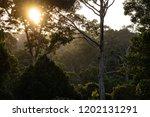 jungle evening sunset over... | Shutterstock . vector #1202131291