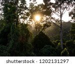 jungle evening sunset over... | Shutterstock . vector #1202131297