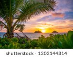 a gorgeous tropical sunrise... | Shutterstock . vector #1202144314