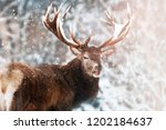 noble red deer male against the ... | Shutterstock . vector #1202184637
