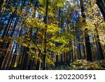 beautiful colorful autumn image ... | Shutterstock . vector #1202200591