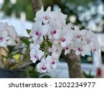 beautiful white orchid hanging... | Shutterstock . vector #1202234977