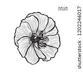 decorative malva  flower ... | Shutterstock .eps vector #1202246017