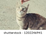 cat looking a piece of meat... | Shutterstock . vector #1202246941