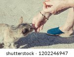 detail on the hands of an old... | Shutterstock . vector #1202246947