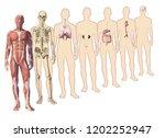 digital watercolor  human body... | Shutterstock . vector #1202252947