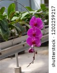 beautiful close up purple... | Shutterstock . vector #1202259217