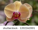 beautiful close up orchid in... | Shutterstock . vector #1202262001