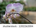 beautiful close up orchid in... | Shutterstock . vector #1202262004