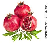 pomegranate isolated on the... | Shutterstock . vector #120232504