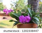 orchid on pot | Shutterstock . vector #1202338447