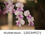 close up  thai  orchid in... | Shutterstock . vector #1202349271