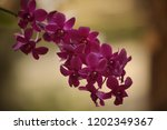 close up  thai  orchid in... | Shutterstock . vector #1202349367