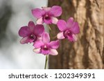 close up  thai  orchid in... | Shutterstock . vector #1202349391