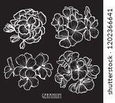 decorative geranium flowers set ... | Shutterstock .eps vector #1202366641