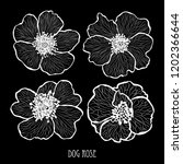 decorative dog rose flowers ... | Shutterstock .eps vector #1202366644