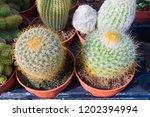 cactus in a garden | Shutterstock . vector #1202394994