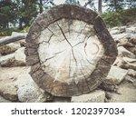 trunk  close up | Shutterstock . vector #1202397034
